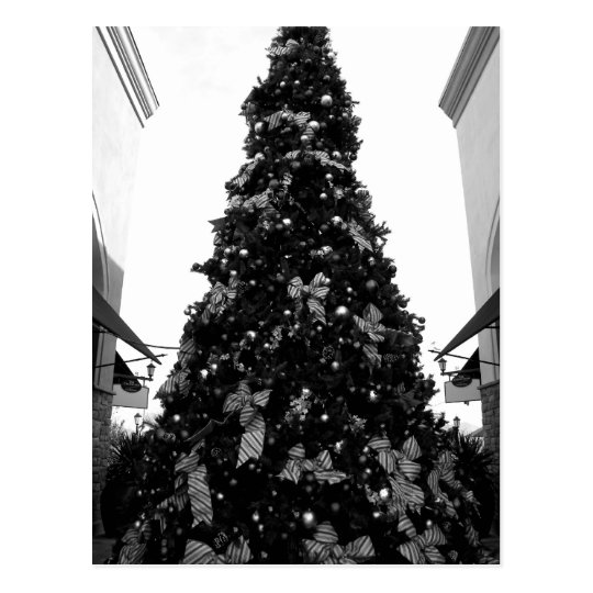 Black and white Christmas tree picture Postcard
