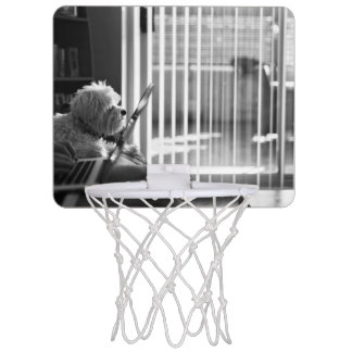Black and white city apartment with dog mini basketball hoop