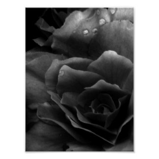 Black and White Close Up of a Double Begonia Poster