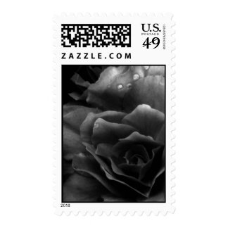 Black and White Close Up of a Double Begonia Stamp