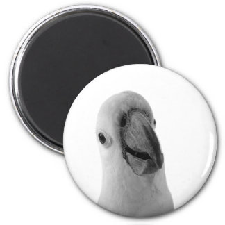 Black and white cockatoo animal portrait photo magnet
