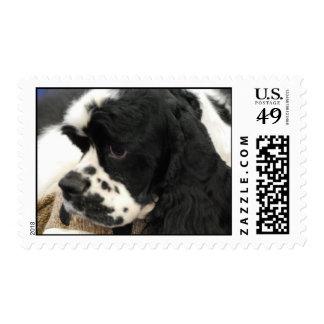Black and White Cocker Spaniel Postage Stamp