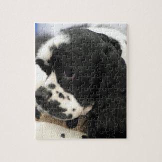 Black and White Cocker Spaniel Puzzle