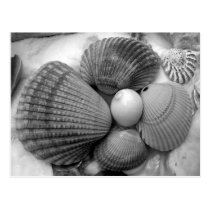 Black and White, Cockle Shells Save the Date Postcard