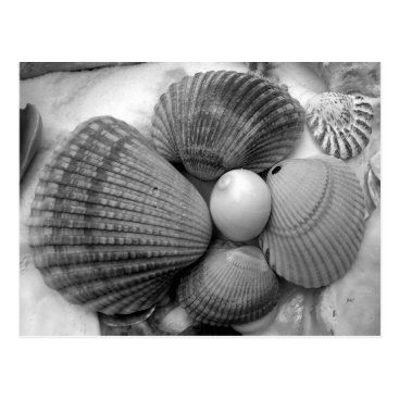Beach Themed Black and White, Cockle Shells Save the Date Postcard
