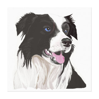 Black and White Collie with Blue Eyes Portrait. Canvas Print