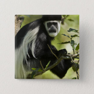 Black and White Colobus Monkey, Colobus 2 Button