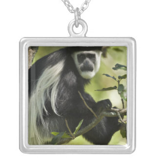 Black and White Colobus Monkey, Colobus 2 Silver Plated Necklace