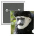 Black and White Colobus Monkey, Colobus Pinback Button