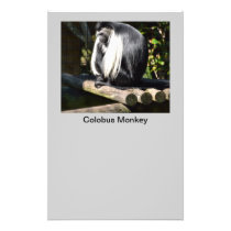 Black and White Colobus Monkey Flyer