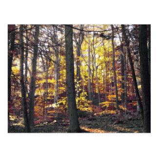 Black And White Colorful Autumn Postcard