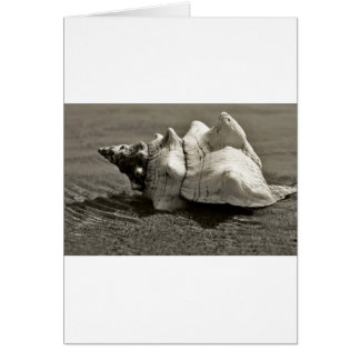 Black and White Conch Shell Card