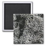 Black and White Coral I Abstract Nature Photo Magnet