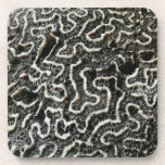 Black and White Coral II Abstract Nature Photo Beverage Coaster