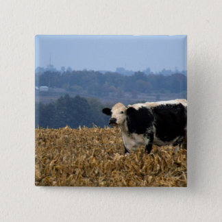 Black and White Cow grazes in freshly plowed field Button