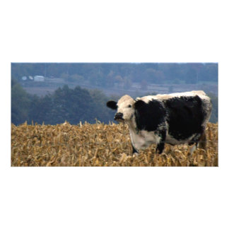 Black and White Cow grazes in freshly plowed field Card
