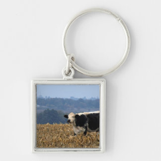 Black and White Cow grazes in freshly plowed field Keychain