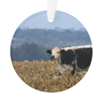 Black and White Cow grazes in freshly plowed field Ornament