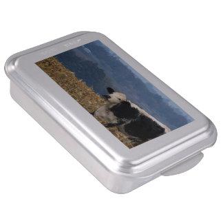 Black and White Cow grazes in freshly plowed field Cake Pan