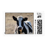 Black and white cow stamp