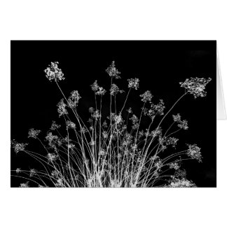 Black and White Crepe Myrtle Greeting Card