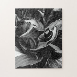 Black and White Curly Hosta Leaves Puzzle
