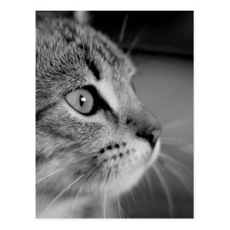Black and White Cute Cat Contemplation Postcard