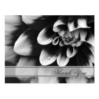 Black and White Dahlia Flower Thank You Postcard