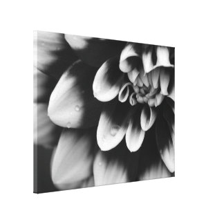 Black and White Dahlia Flower Wrapped Canvas Print