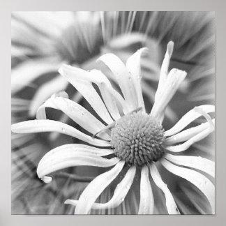 Black And White Daisies Print