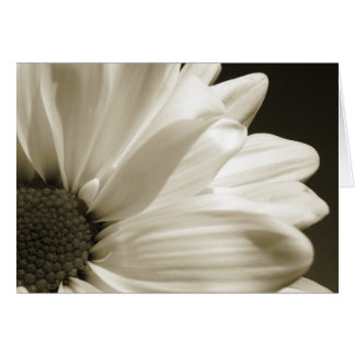 Black and White Daisy Notecard