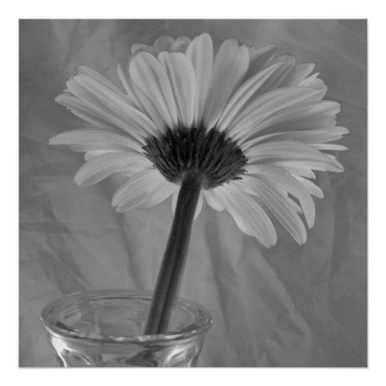 Black and White Daisy Poster