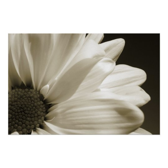 Black and White Daisy Poster | Zazzle.com