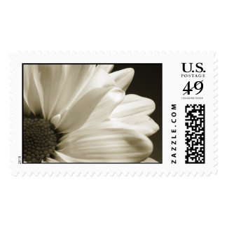 Black and White Daisy Stamp