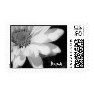 Black and white daisy with Brenda Postage