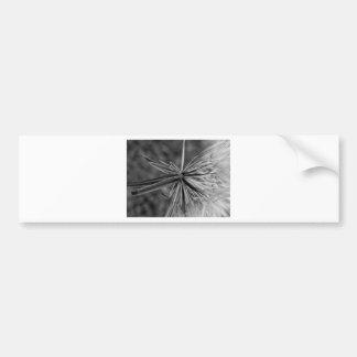Black and white dandelion bumper sticker