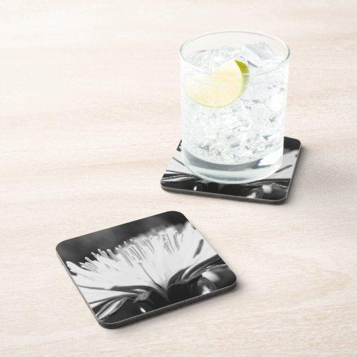 black and white dandelion flower drink coasters