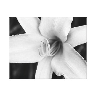 Black and White Day Lily Stretched Canvas Prints