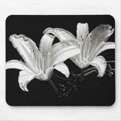 Black and White Daylily Mouse Pad