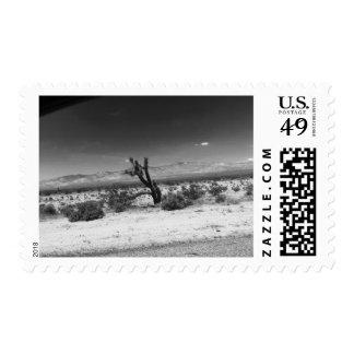 Black and White Desert Cactus Postage Stamp