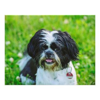 Black and white dog flyer design
