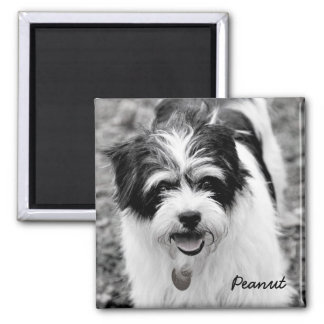 Black and White Dog Photography 1 2 Inch Square Magnet