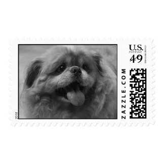 Black and White Dog Postage