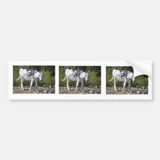 Black and white donkey car bumper sticker