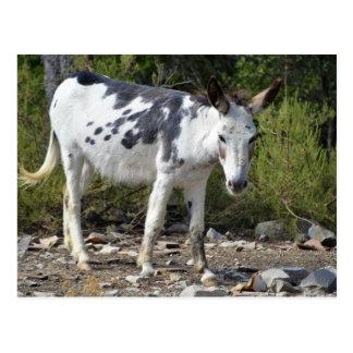 Black and white donkey postcard
