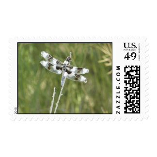 black and white dragonfly postage