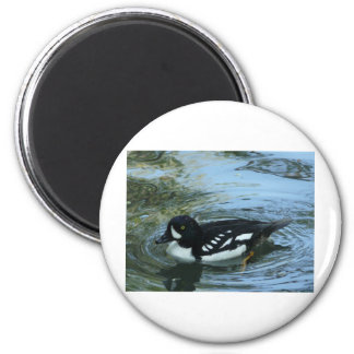 black and white duck 2 inch round magnet