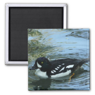 black and white duck 2 inch square magnet