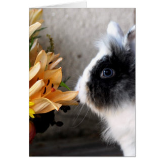 Black and white dwarf rabbit cards