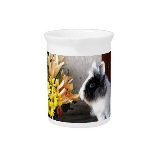 Black and white dwarf rabbit drink pitcher